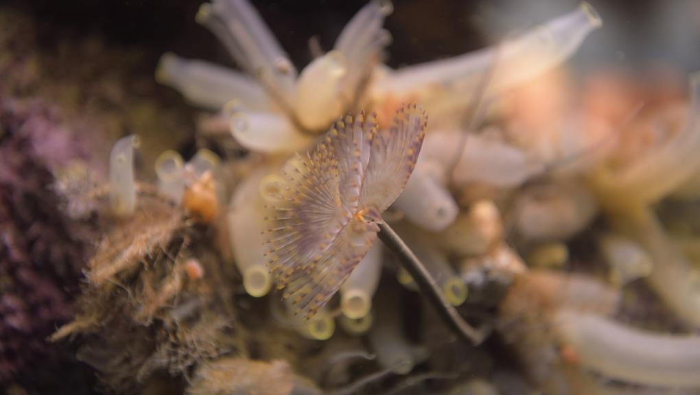 Aquarium et salles de Concarneau. © MNHN - J.C Domenech