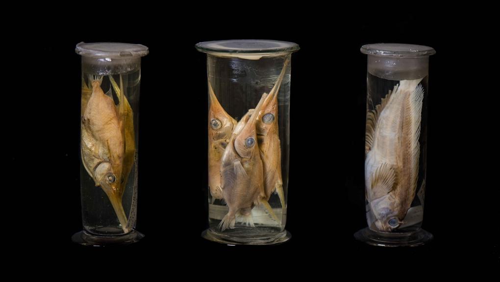 Collection de spécimens marins © MNHN - Agnès Iatzoura