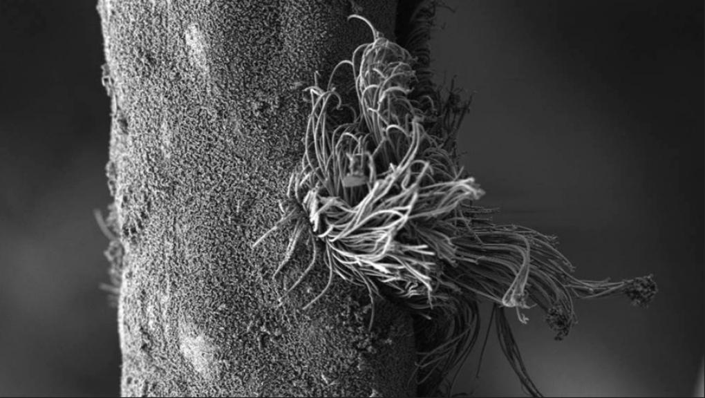 Photo MEB © MNHN - Station de biologie marine de Concarneau