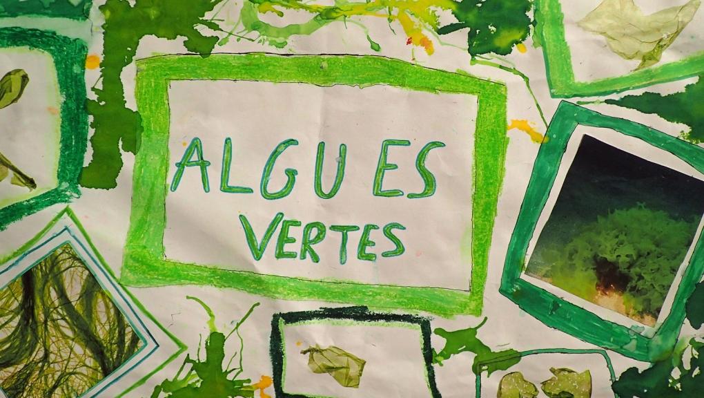 Jeunes Reporters des Arts, des Sciences et de l'Environnement
