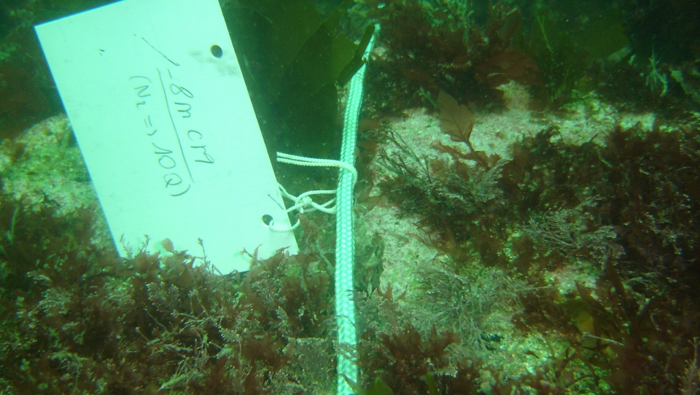 Étiquette sur transect marquant la zone de relevé (- 8 mètres) et le nombre de quadrats à y effectuer © MNHN - Sandrine Derrien