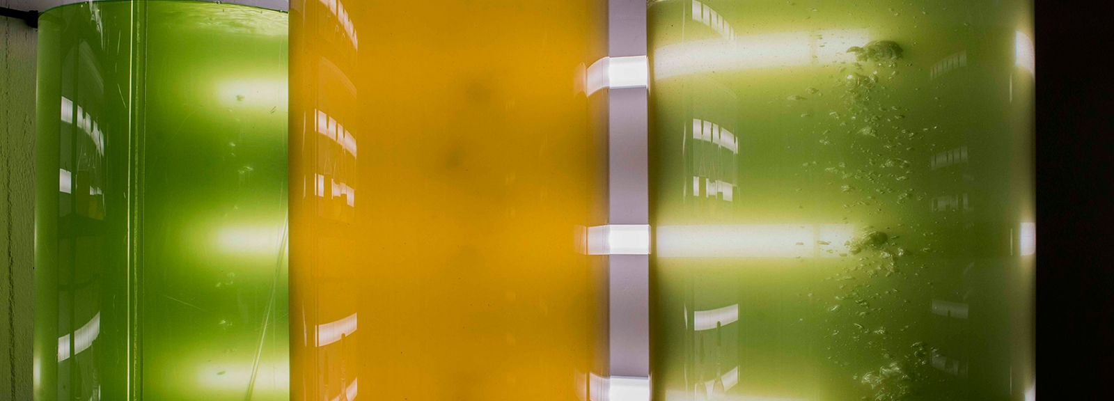 Élevage de micro-algues au Marinarium de Concarneau © MNHN - Agnès Iatzoura