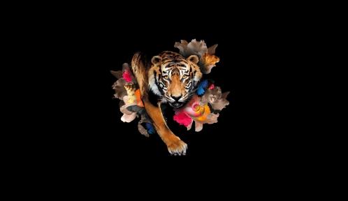 Tigre de Sumatra © MNHN - Patrick Lafaite
