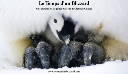 Expo le temps d'un blizzard